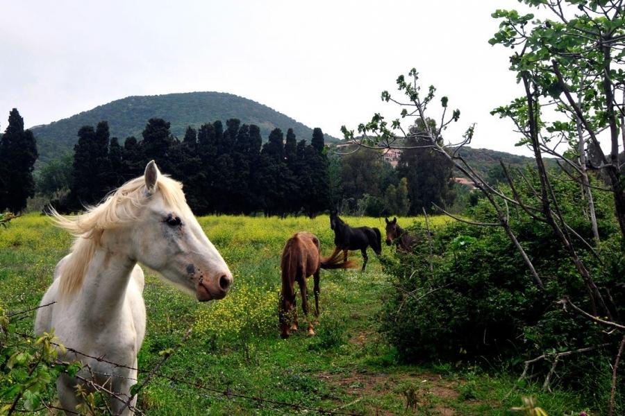 Riserva_naturale_di_Monte_Arcosu_-_Sardegna.jpg