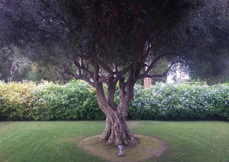 mediterranean garden in Sardinia