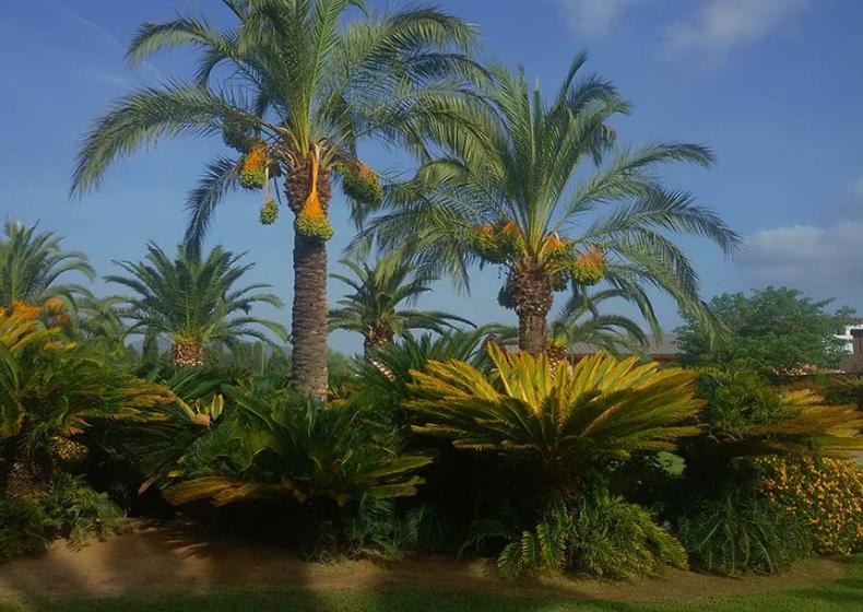 palm-trees-collection-Sardinia