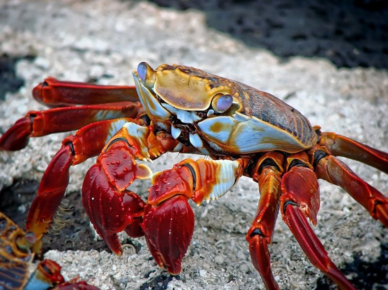 crab-crostacei-San-Benedetto-Market.jpg