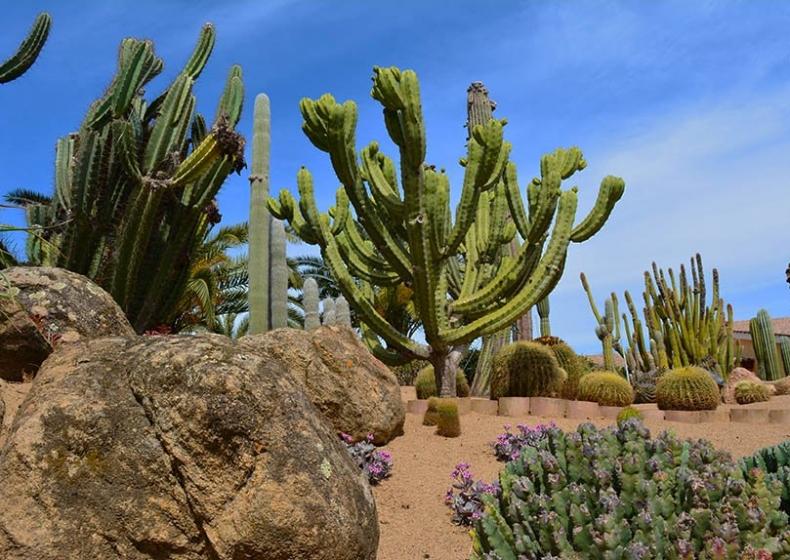 succulents Pula Sardinia