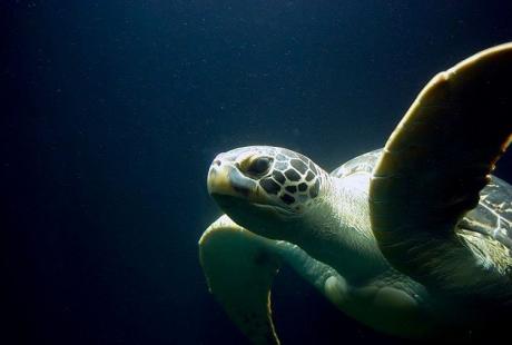 turtle rescue center